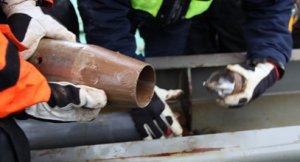 'Core catcher' på piston corer, hvorfra overskydende sediment udtages til mikrobiologiske undersøgelser. (Foto: Ragner Jerre)
