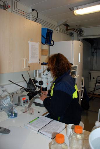 Kajsa Tönnesson ved mikroskopet i laboratoriet. Foto: Daniella Gredin.